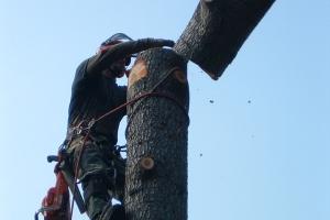 Baumfällungen - Spezialfällungen